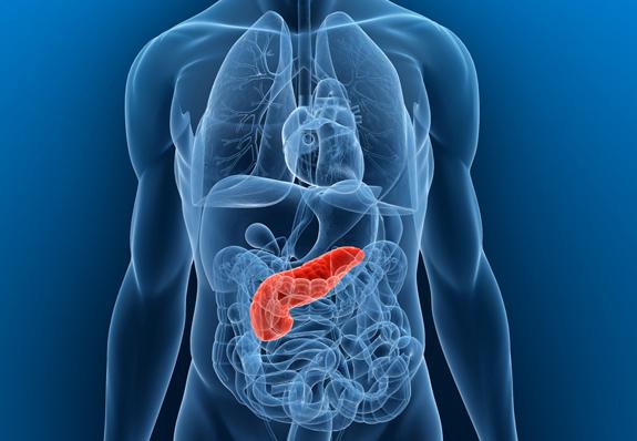 07_pancreas2 (1)-tamtraco.hu